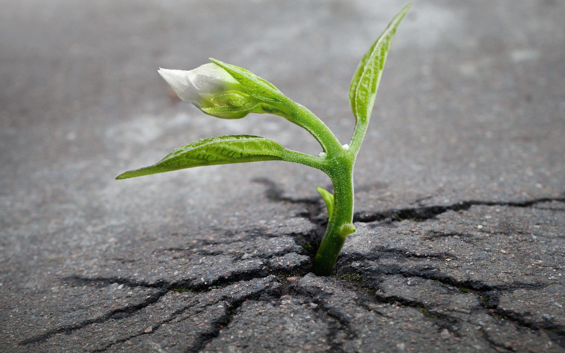 Pflanze wächst aus Asphalt
